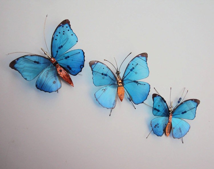 wing-blue