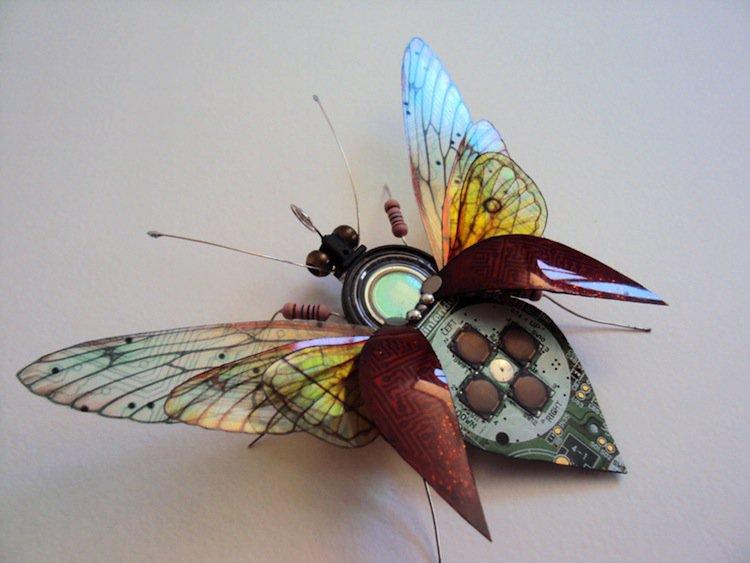 wing-bug