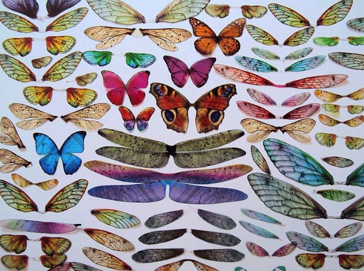 wing-butterflies