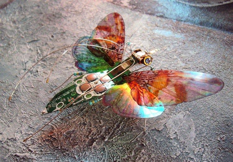 wing-butterfly