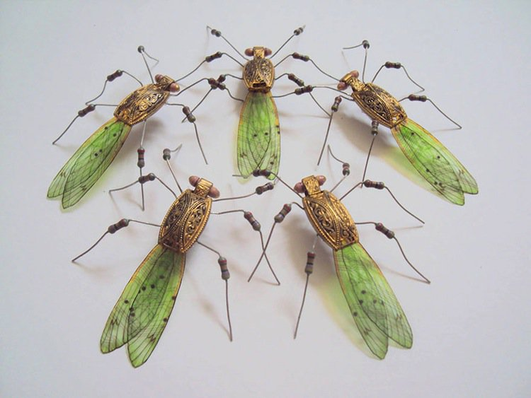 wing-cicada