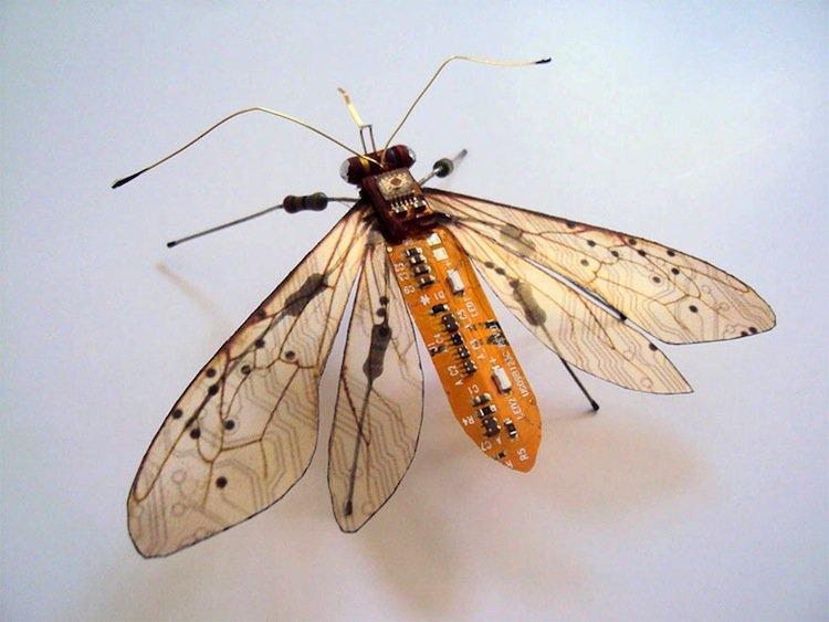 wing-moth
