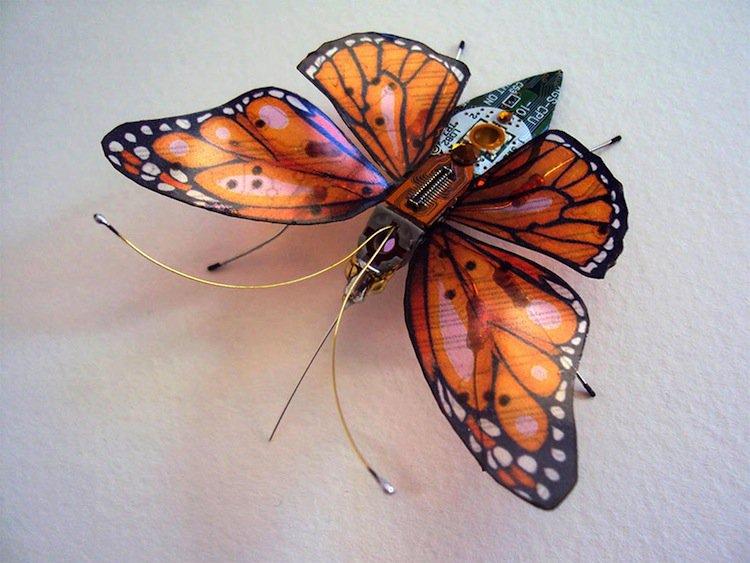 wing-orange