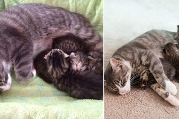 Abandoned Kittens United With A Mommy Cat
