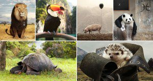 Artist Creates Animal Collages From Stock Photos