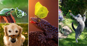 Butterflies With Animals