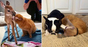 Cat Cares For Animals In Hospital