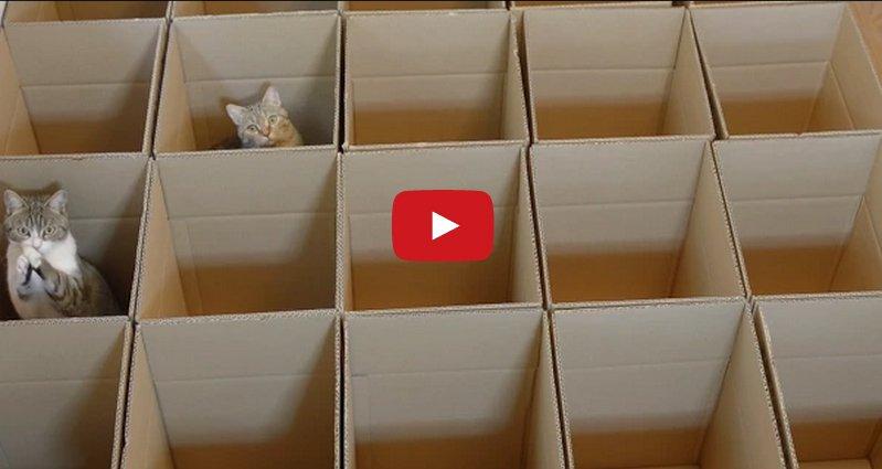 Watch These 9 Gorgeous Kitties Enjoying Their Cardboard Maze