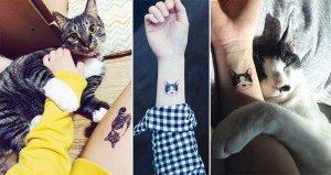 Cat Tattoos South Korea