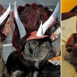 Dog Dinosaur Costumes