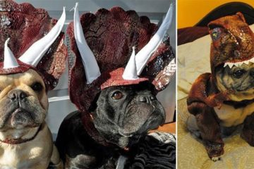 Dog Dinosaur Costumes