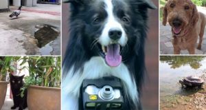 Dog Takes His Own Photos