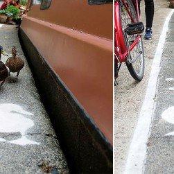 Duck Lanes