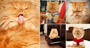Garfi The Angry Cat