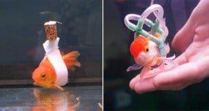 Goldfish Cork Sling