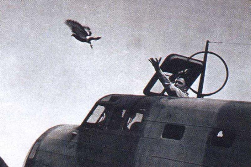 History Pigeons