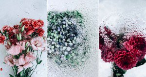 Images Of Flowers Underwater