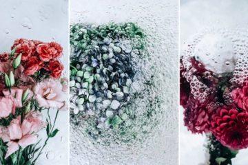 Images Of Flowers Underwater