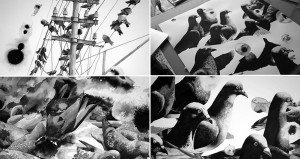 Ink Drawings Of Pigeons