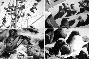 Ink Drawings Of Pigeons