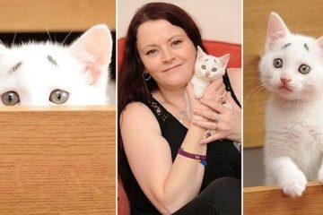 Kitten Born With Strange Eyebrows
