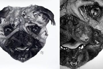 Liam Gerrard Animal Portraits