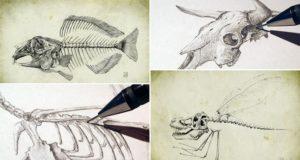 Martin Van Libs Animal Skeletons
