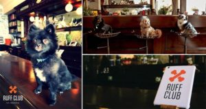 New York Private Club For Dogs