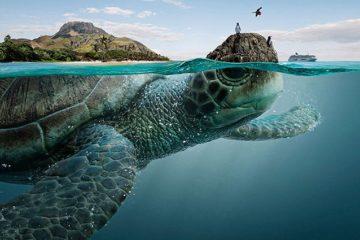 Sea Creatures Ecuador