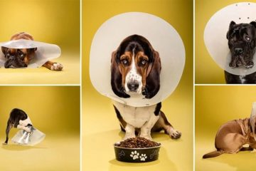 Shameful Looking Cone Headed Dogs