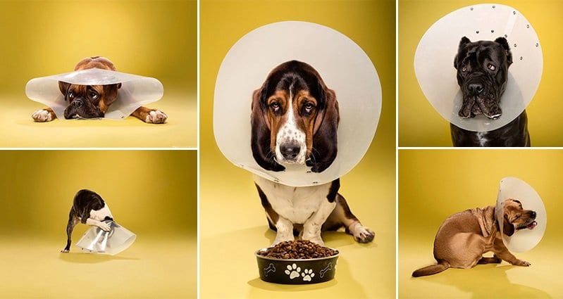 Photographer Ty Foster captured portraits of dogs wearing
