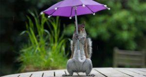 Squirrel Has Its Own Umbrella