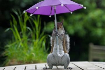 Squirrel Has Its Own Umbrella