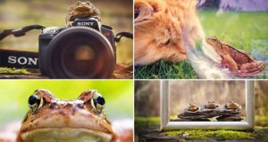 Toad Photographs