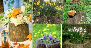 Tree Stumps Turned Into Planter