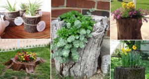 Tree Stumps Turned Into Planters