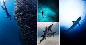 Underwater Photographs