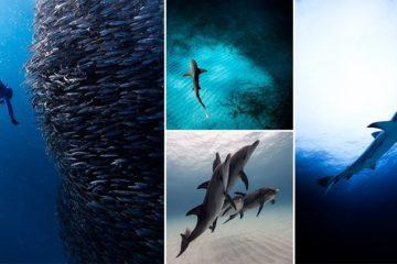 Underwater Photographs