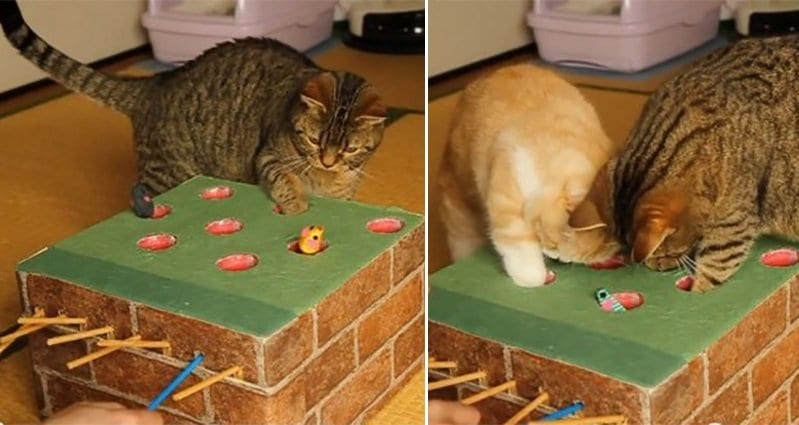 This Cat Owner Built An Awesome Whack A Mole Game For