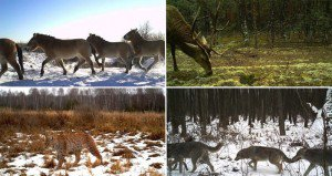 Wildlife Thriving In Nuclear Disaster Zone