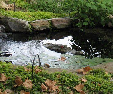 alligator head pond