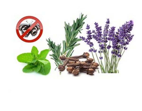 anti moth plants