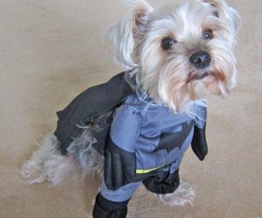 batman dog costume cape