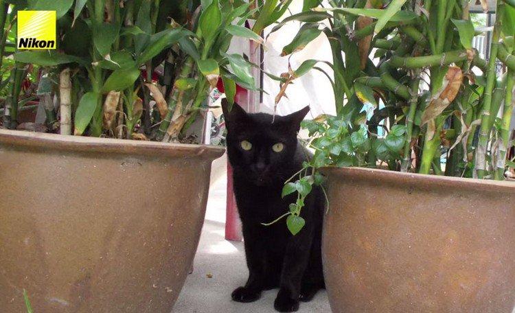 black cat plants