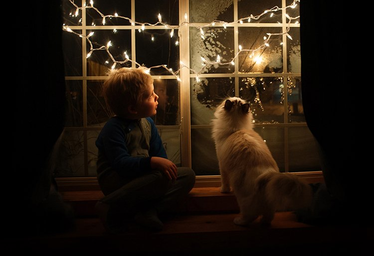 boy-cat-friendship-beth-mancuso-window