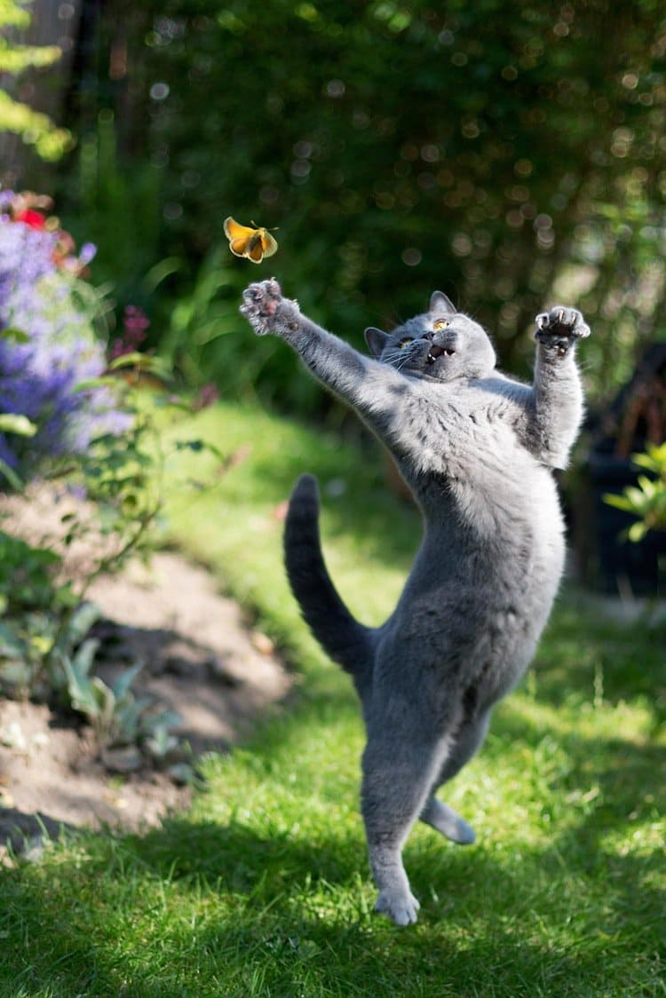 butterfly-cat-four