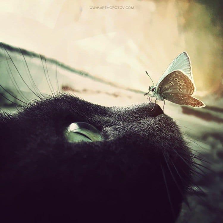 butterfly-cat