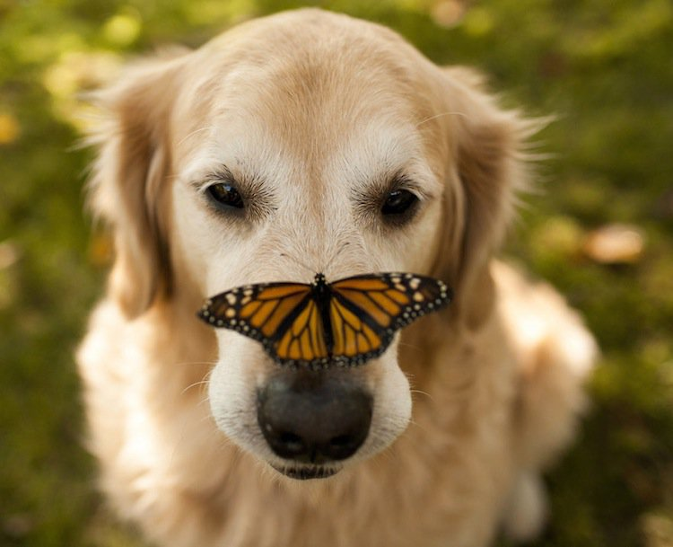 butterfly-dog