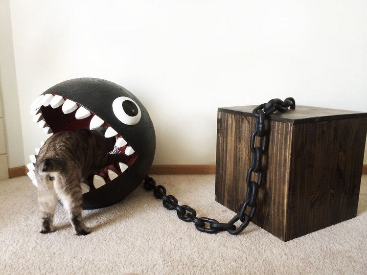 cat checking chain chomp