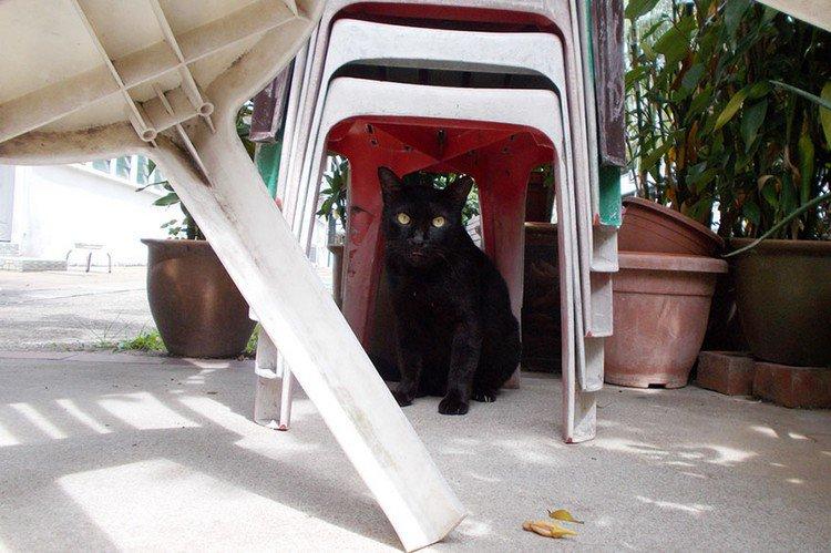 cat plastic chairs